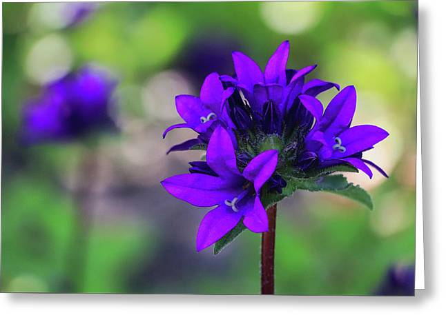 Greeting Card featuring the photograph Purple Spring Flower by Cristina Stefan