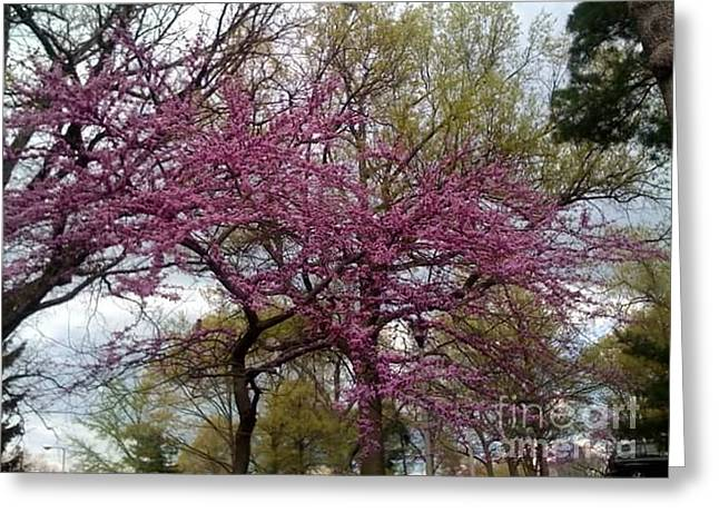 Greeting Card featuring the photograph Purple Spring Trees by Rachel Maynard