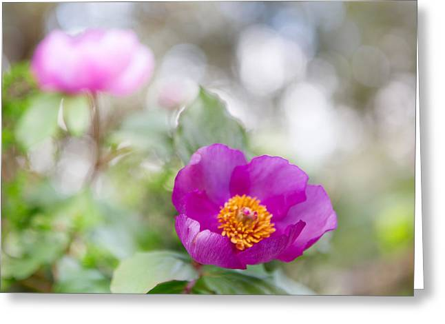 Purple Spring Wild Flower Romantic Nature Greeting Card by Dirk Ercken