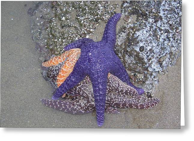 Greeting Card featuring the photograph Purple Starfish by Angi Parks