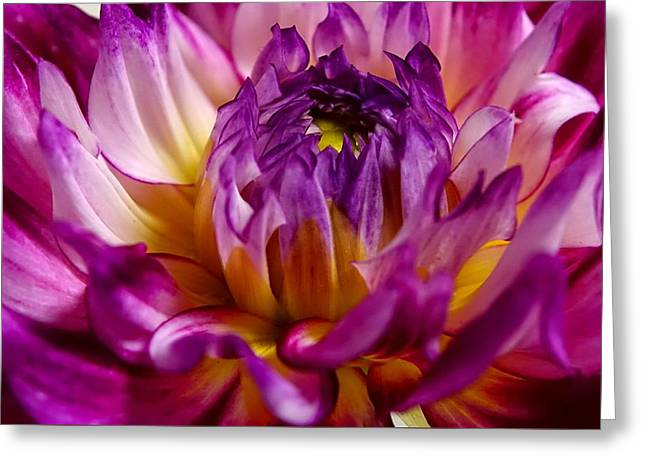 Purple Sunset Flower 2 Greeting Card by Marianne Dow
