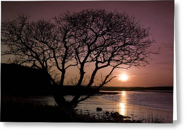 Purple Sunset With Tree And Lake Greeting Card by Gabor Pozsgai
