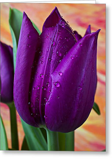 Purple Tulip Greeting Card by Garry Gay