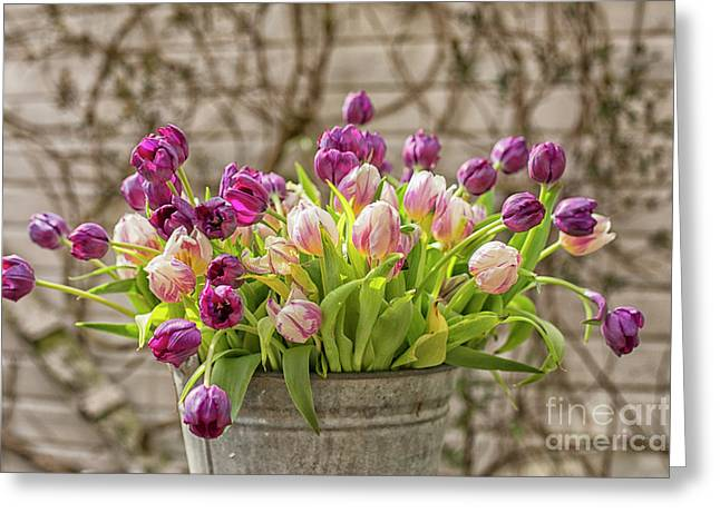 Greeting Card featuring the photograph Purple Tulips In A Bucket by Patricia Hofmeester