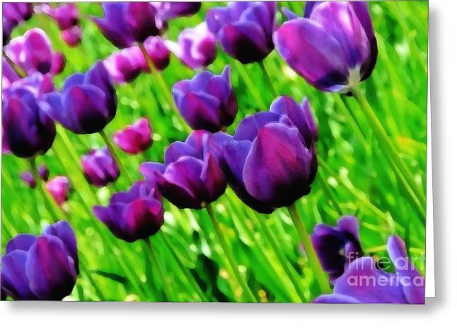 Purple Tulips Greeting Card by Lyle  Huisken