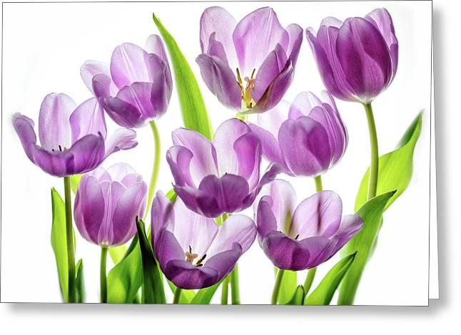 Purple Tulips Greeting Card by Rebecca Cozart