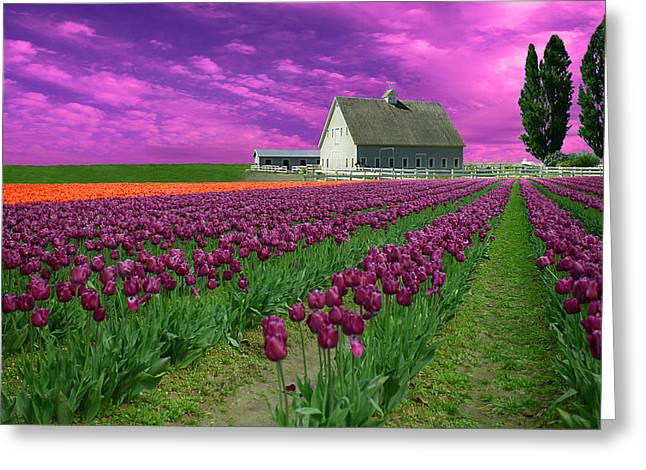 Purple Tulips With Pink Sky Greeting Card