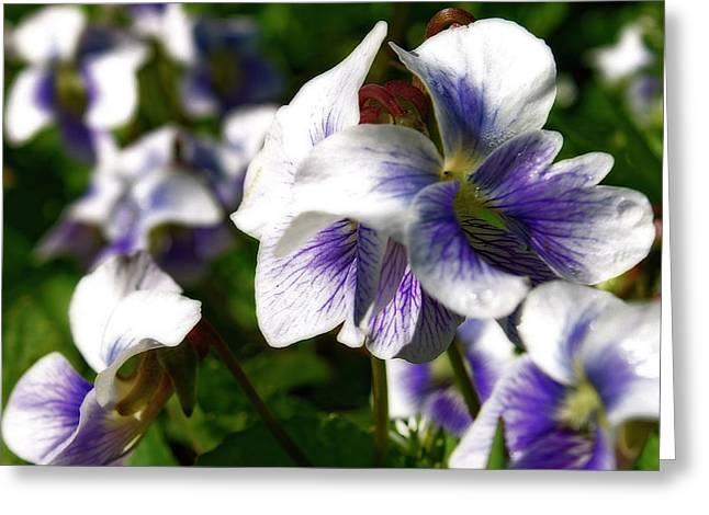 Hovind Greeting Cards - Purple Veins  Greeting Card by Scott Hovind