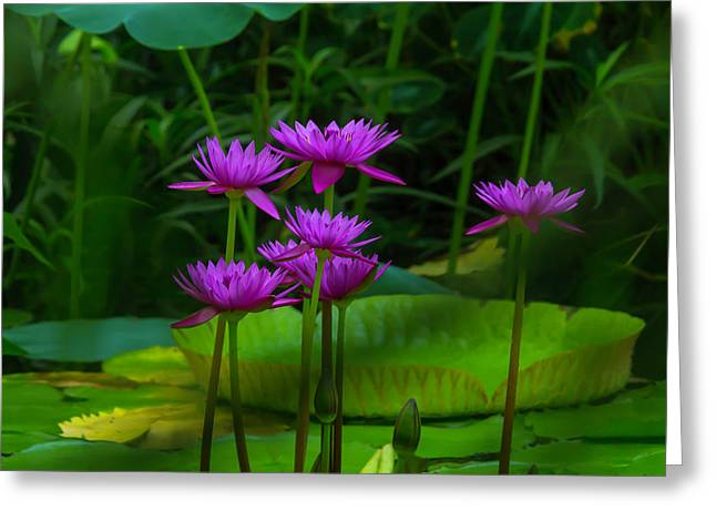 Purple Water Lilies Greeting Card