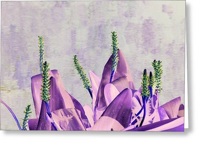 Purple Water Plant Greeting Card