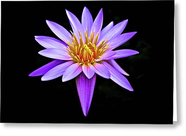 Purple Waterlily With Golden Heart Greeting Card