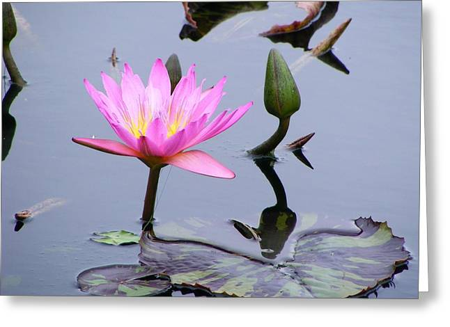 Greeting Card featuring the photograph Purple Waterlily With Pod by Margie Avellino