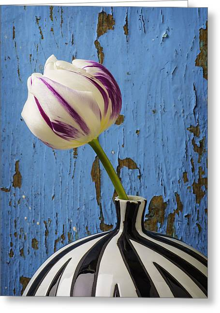 Purple White Tulip Against Blue Wall Greeting Card by Garry Gay