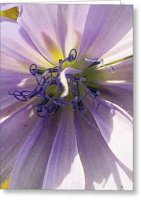 Purple Wild Flower II Greeting Card by Paul Shefferly