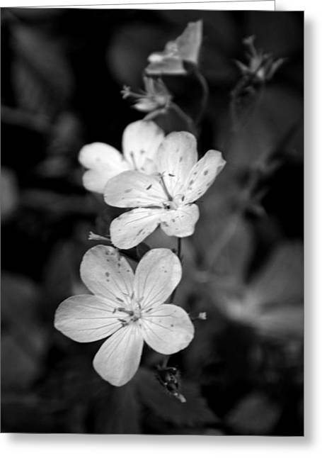 Purple Wildflower In Black And White  Greeting Card by Michelle  BarlondSmith