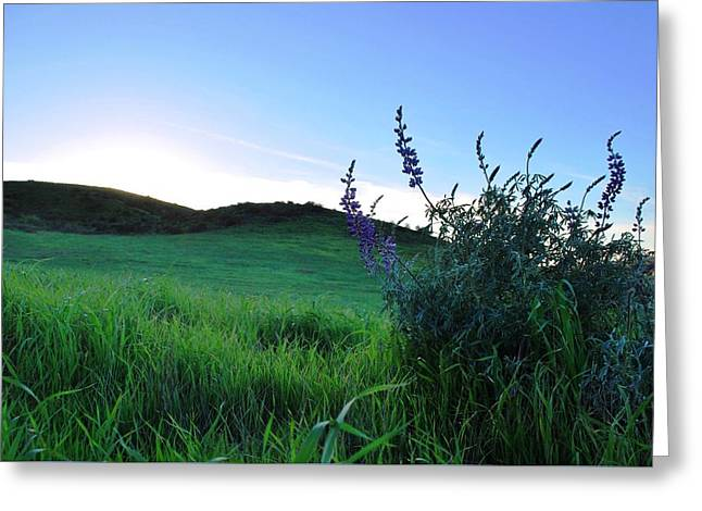 Greeting Card featuring the photograph Purple Wildflowers In Beautiful Green Pastures by Matt Harang