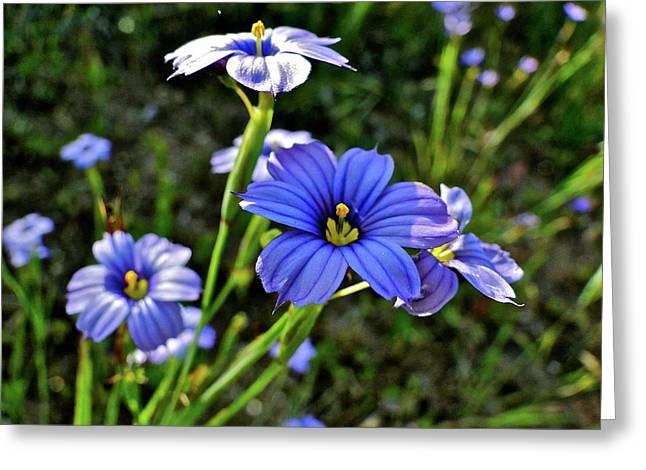 Purple Wildflowers Greeting Card by Liz Vernand