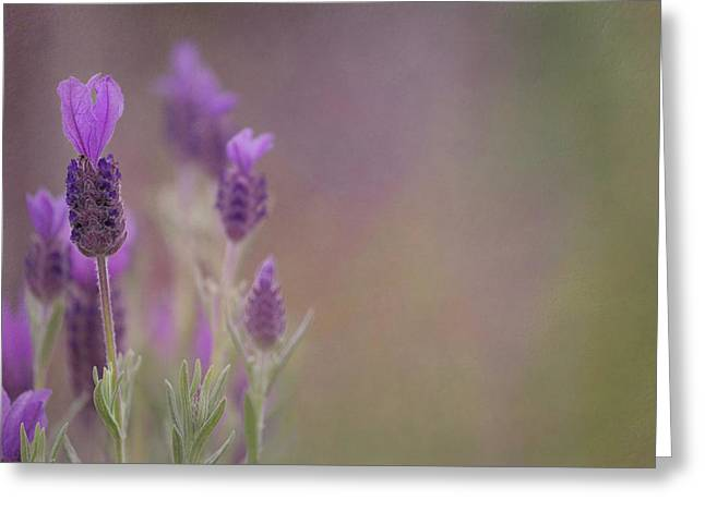 Purple Wings Greeting Card by Jacqui Boonstra
