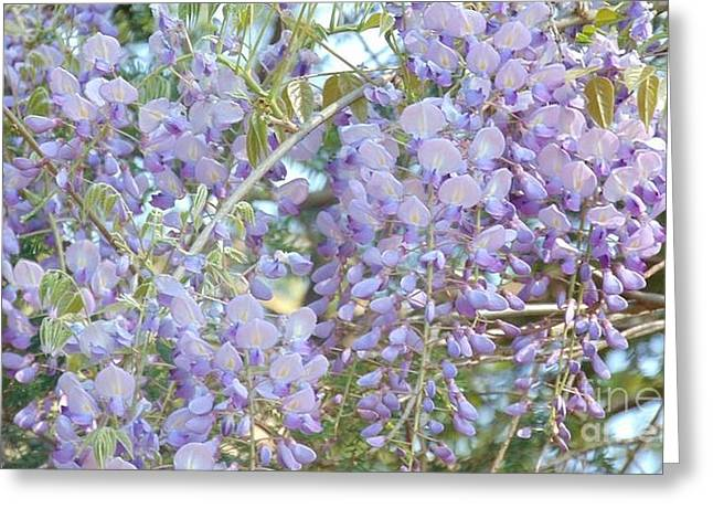 Purple Wisteria Greeting Card