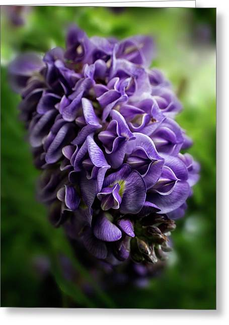 Purple Wisteria Greeting Card by Greg and Chrystal Mimbs