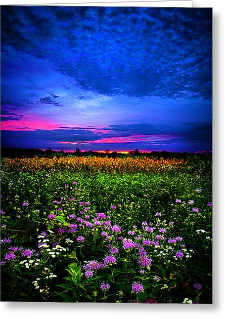 Purples Greeting Card by Phil Koch