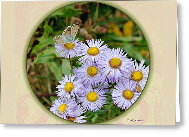 Purplish Copper On Wild Asters Greeting Card