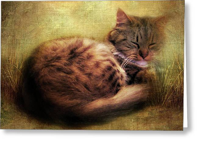 Purrfectly Content Greeting Card by Jessica Jenney