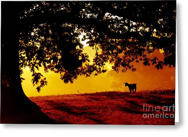 Webster Springs Greeting Cards - Pygmy in Morning Light Greeting Card by Thomas R Fletcher