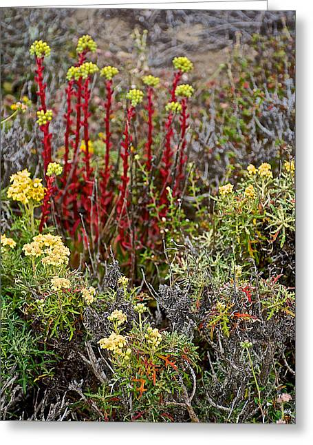 Pygmyweed In Point Lobos State Reserve Near Monterey-california  Greeting Card by Ruth Hager