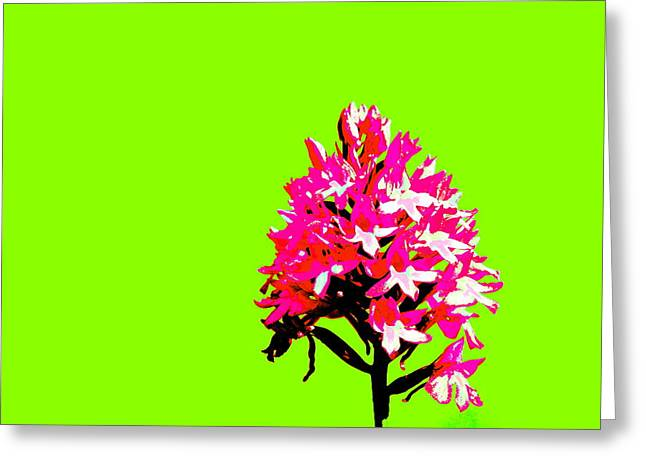 Green Pyramid Orchid Greeting Card