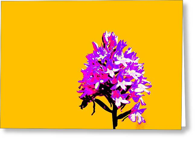 Orange Pyramid Orchid  Greeting Card