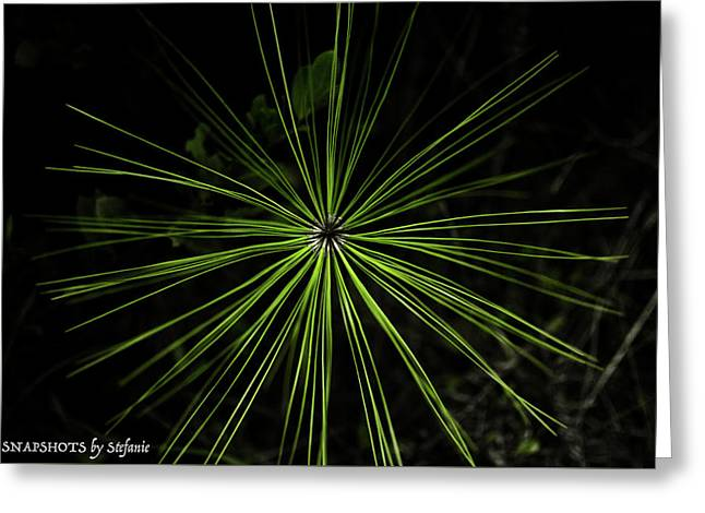 Pyrotechnics Or Pine Needles Greeting Card