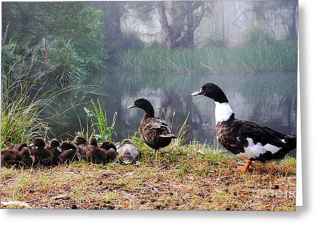 Quack Quack Ducks And A Pond Greeting Card by Lexa Harpell