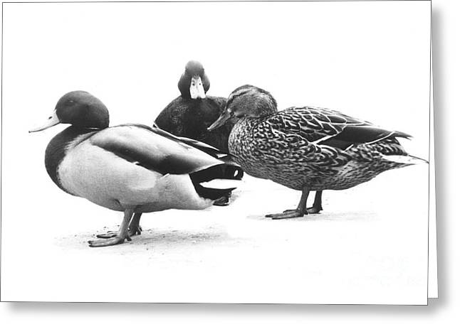 Quackers Greeting Card by Michael Swanson