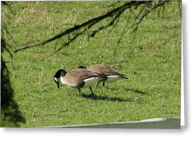 Quacking Around Greeting Card by ShadowWalker RavenEyes Dibler