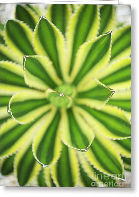 Quadricolor Agave Plant Greeting Card