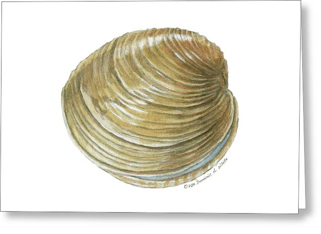 Quahog Shell Greeting Card