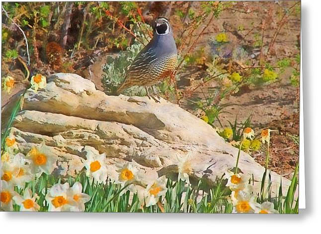 Quail And Daffies Greeting Card by Donna Kennedy