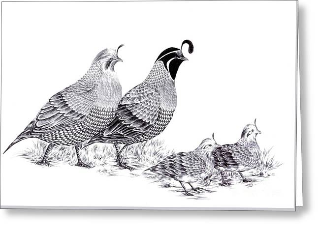 Quail Family Evening Stroll Greeting Card