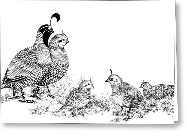 Quail Family Outing Greeting Card