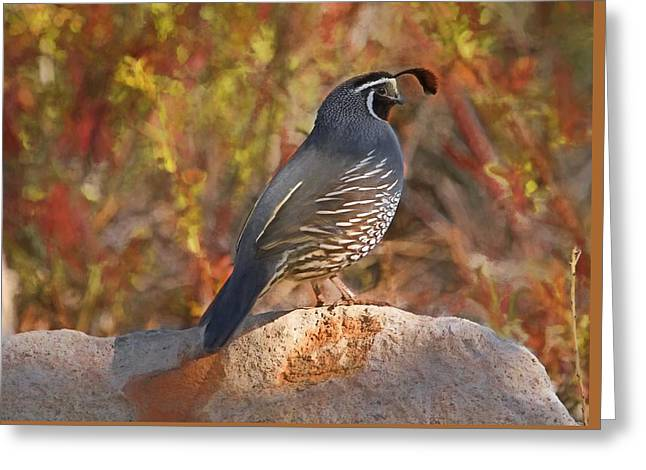 Quail On The Rocks Greeting Card by Donna Kennedy