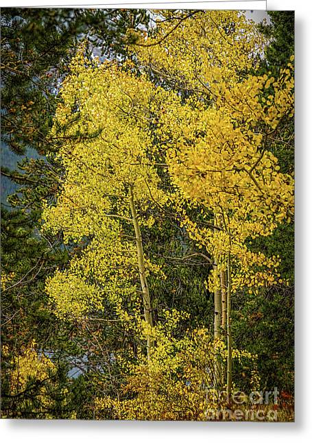 Quakers Greeting Card by Jon Burch Photography