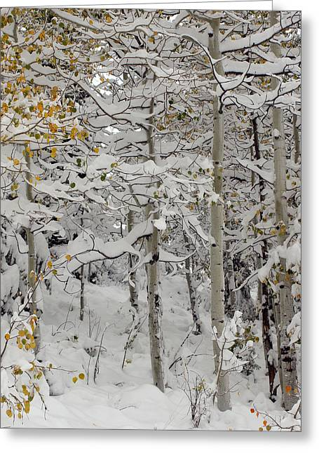 Quakies In Early Winter Greeting Card
