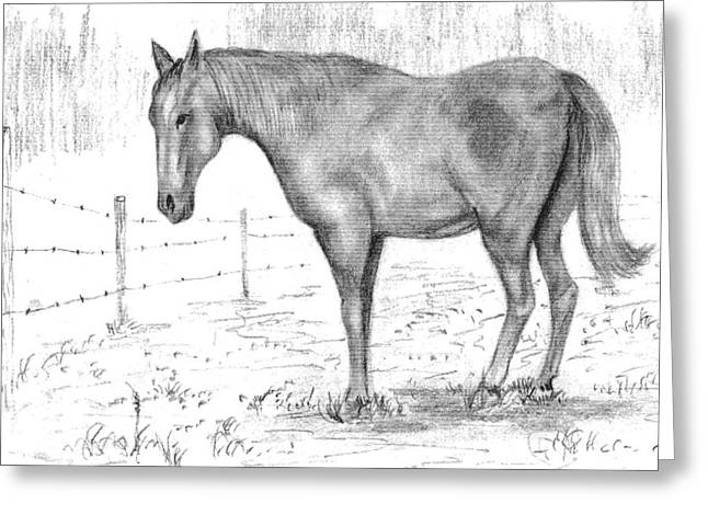 Quarter Horse Greeting Card by Barney Hedrick