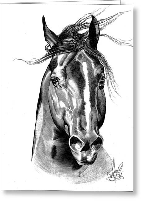 Quarter Horses Drawings Greeting Cards - Quarter Horse Head Shot in Bic Pen Greeting Card by Cheryl Poland