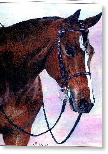 Quarter Horses Drawings Greeting Cards - Quarter Horse Hunter Under Saddle Portrait Greeting Card by Olde Time  Mercantile