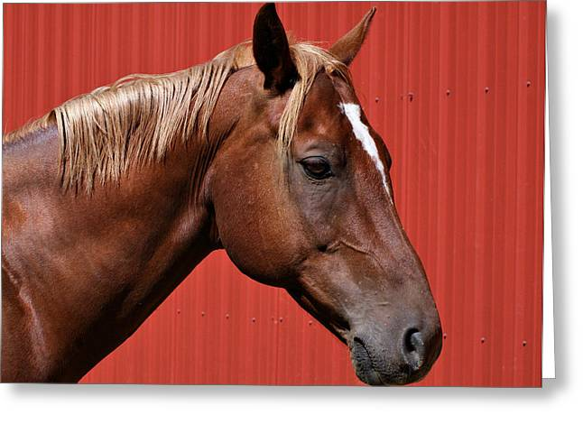 Quarter Horse II Greeting Card by Sandy Keeton