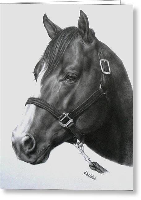 Quarter Horse Portrait Greeting Card by Margaret Stockdale
