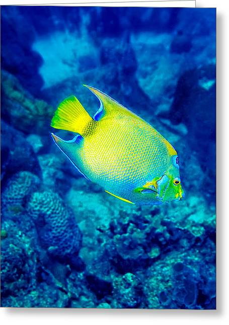 Greeting Card featuring the photograph Queen Angelfish I by Perla Copernik