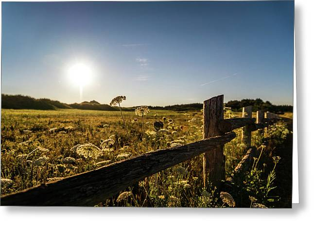 Greeting Card featuring the photograph Queen Annes Lace Along Cavendish Fencerow by Chris Bordeleau